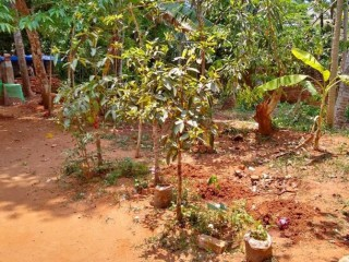 5 CENT LAND FOR SALE , NEYYATTINKARA