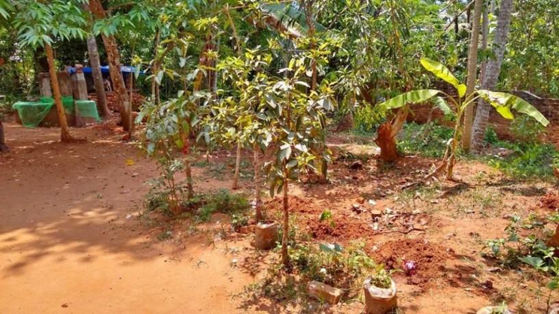5-cent-land-for-sale-neyyattinkara-big-0
