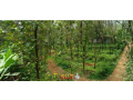 kothala-nh-220-land-for-sale-in-pampady-small-1