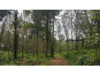 Kothala Nh 220 Land For Sale In Pampady