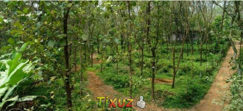 kothala-nh-220-land-for-sale-in-pampady-big-1